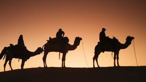 Silhouetted camels with tourist riders at sunset, Thar Desert.